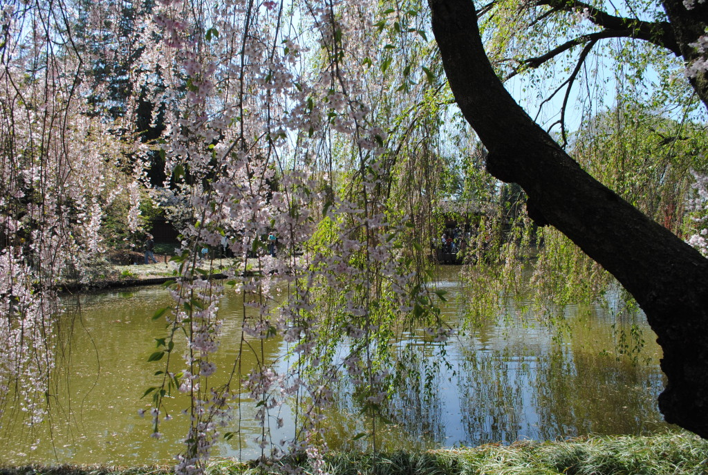 Japenese Hill-and-Pond Garden Brooklyn Botanic Garden