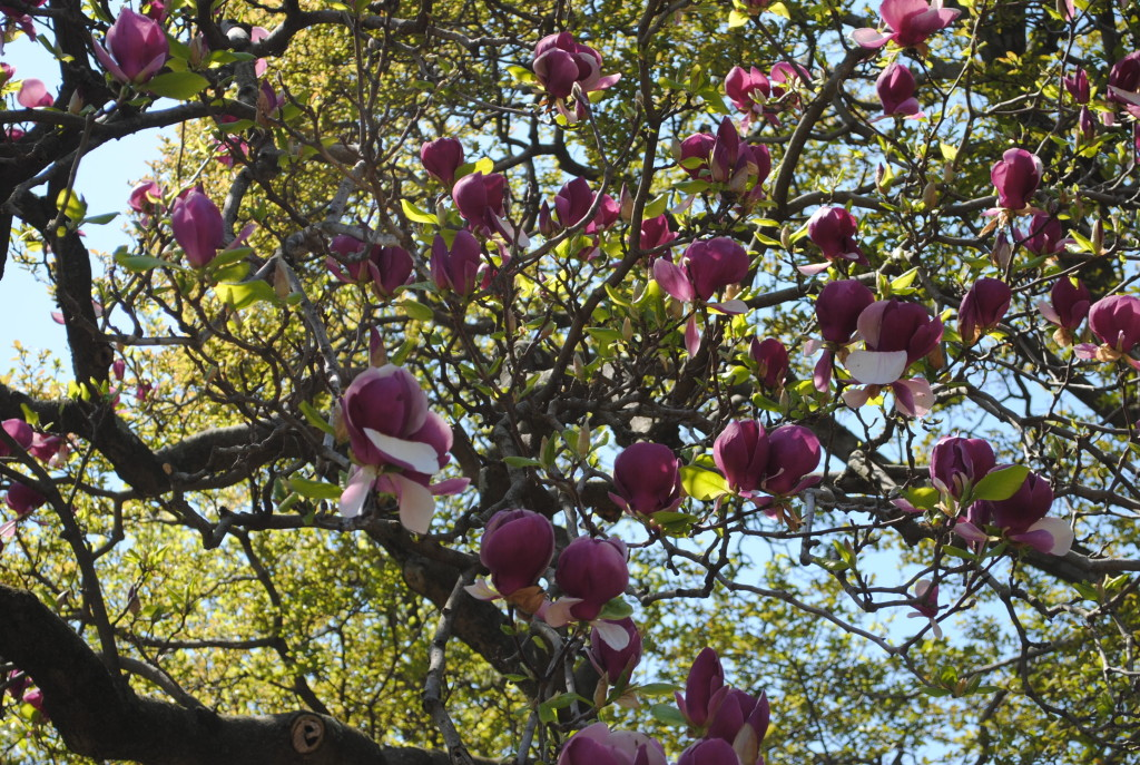 Magnolia Pavilion Brooklyn Botanic Garden